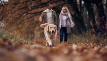 Senior Couple In Park In Autumn