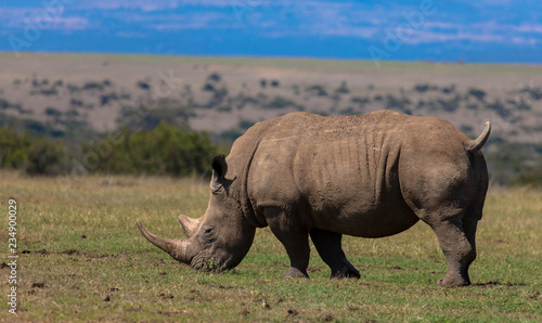 Nashorn im Lake-Nakuru-Nationalpark