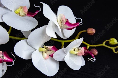 Fotobehang Orchidee white orchids on a black background