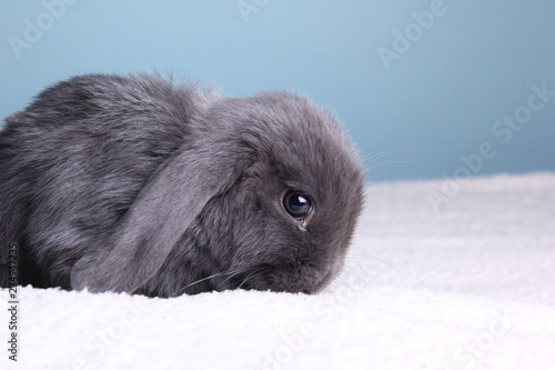 Little rabbit in front of a colored background Canvas Print