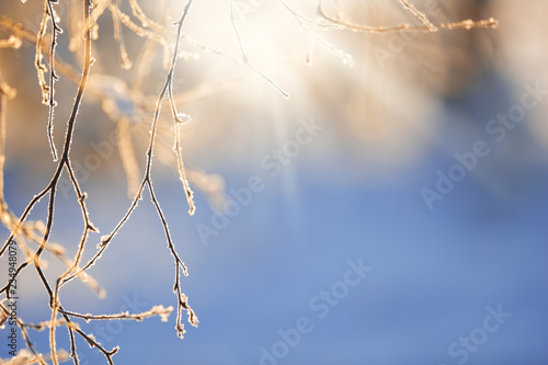 Fotografía  Frost covered birch tree (Betula pendula) branches in winter landscape backlight by the low angle sun