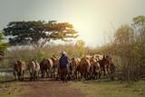 Zwierzęta gospodarskie z tyłu lub rolnik i krowa to styl życia ludzi w prowincji Nong Han Lakeside Sakon Nakhon w Tajlandii. - 234952643