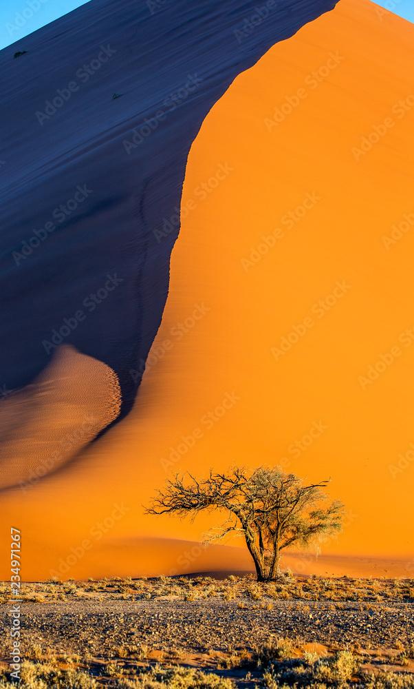 Single tree on the background of a beautiful dune. Black and white photography. Africa. Landscapes of Namibia. Sossusvlei. Namib-Naukluft National Park.