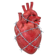 Heart Pain Concept. Human Heart With Barbed Wire. 3D Rendering