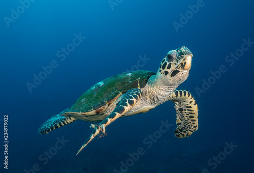 Deurstickers Schildpad Sea turtle swimming