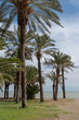 Palm trees in Torremolinos