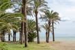 Tropical palm trees at beach