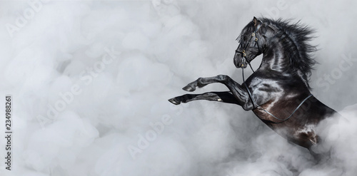 Black Spanish horse rearing in smoke.
