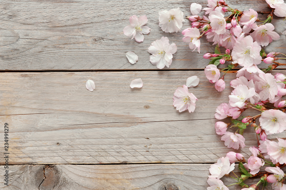 Fototapeta Sakura flowers with petals on wooden background