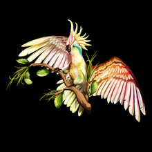 Illustration Of Parrot Cockatoo On The Tropical Branches With Leaves. Hand Drawn, Vector Stock, Watercolor.