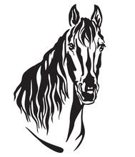 Decorative Portrait Of Horse Vector Illustration 2