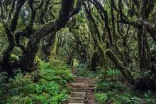 Path, Stairs In Rainforest, Egmont National Park, Mount Taranaki, Taranaki, North Island, New Zealand, Oceania