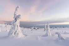 Snow-covered Trees, Winter Lan...