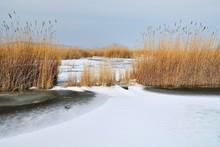 Reed Belt At The Frozen Lake Neusiedel, Illmitz, Burgenland, Austria, Europe