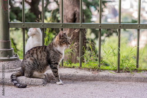 Photo  A beautiful wild, stray cat stands regally in front of an iron fence in the Plaka neighborhood in Athens, Greece, where stray cats are common
