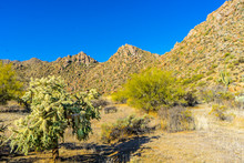 A Chain Fruit Cholla And Bould...