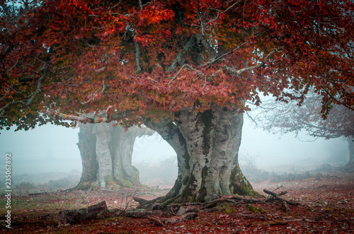 Fotografie, Obraz  bosque y bosques encontrados, hacedero del rio urederra, del país vasco para tur