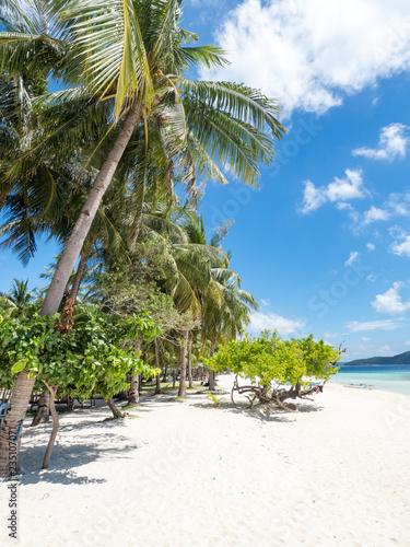 Foto op Plexiglas Tropical strand View of tropical beach on the island Malcapuya, Busuanga, Palawan, Philippines. Beautiful tropical island with sand beach, palm trees. Travel concept. November, 2018
