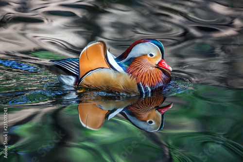 Photo  Mandarin ducks are swimming in the natural atmosphere.