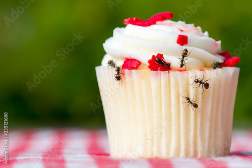 Photo  Closeup view of ants on a cupcake