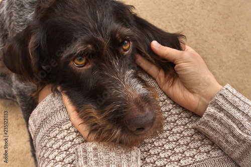 Fotografia brown dog laid his head on the lap of the woman