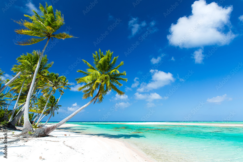 Fototapety, obrazy: travel, seascape and nature concept - tropical beach with palm trees in french polynesia