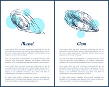 Mollusk And Clam Posters Set V...