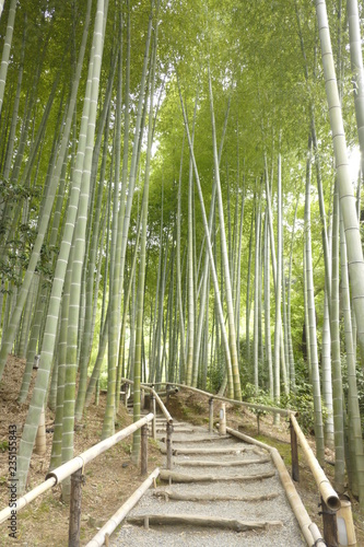 Poster Bamboe japancm1
