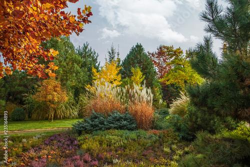 Beautiful alpine hill with trees, shrubs and ornamental grasses in the autumn park Tapéta, Fotótapéta