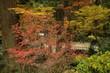橋の周りのカラフルな紅葉