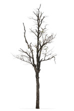 Leave Less Tree Branches Isolated On White Background