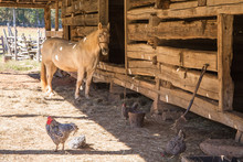 Rustic Barnyard With Horse And...