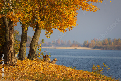 Foto op Canvas Herfst Autumn forest lake landscape. Autumn forest lake water scene. Golden autumn forest lake view