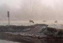 Livestock In Winter Weather UK