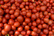 Fresh Harvested Ripe Red Tomatoes In A Farmers Produce Market In Jaipur, Rajasthan, India.
