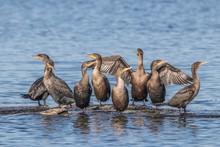 Cormorant Shoals