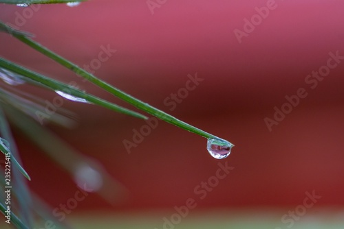 Fresh water drop pouring from tree