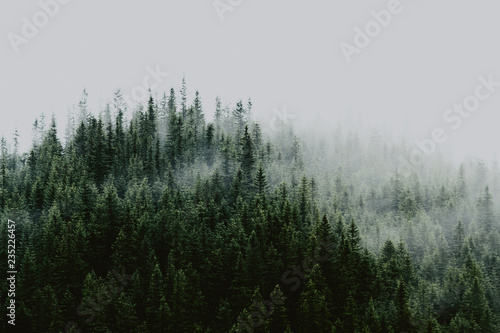 Fototapeten Wald Misty landscape with fir forest. Amazing vintage retro hipster background