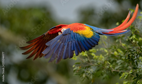 Scarlet Macaw in Costa Rica Canvas Print