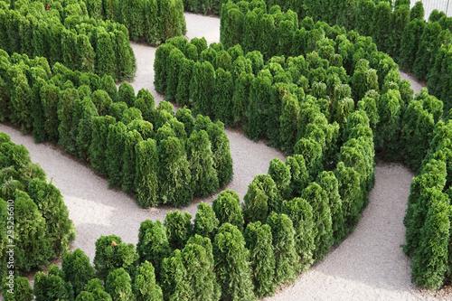 Cadres-photo bureau Jardin maze of green plants nature nice green
