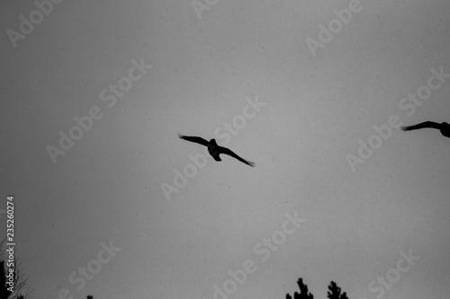 Cadres-photo bureau Plongée birds flying in the mountains