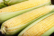 raw sweet corn close up