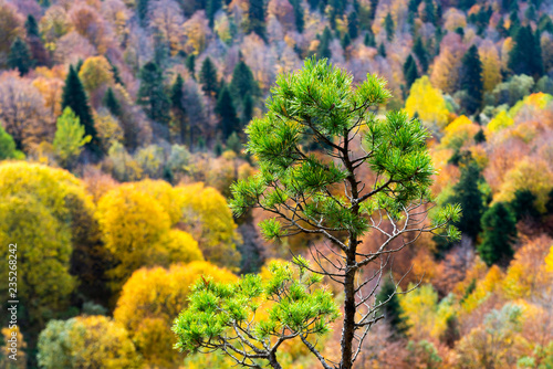 Fotografía  Scenic landscape with trees in mountain forest in autumn