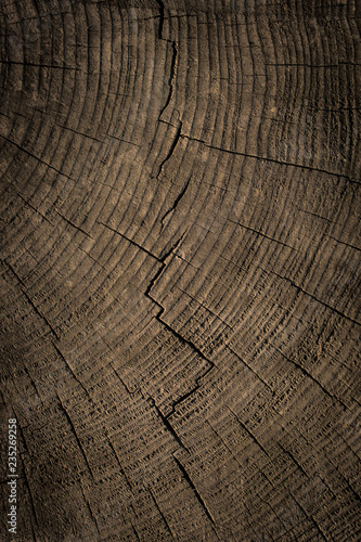 Photo Stands Firewood texture Cut tree stump surface as a background