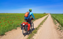 Biker By Camino De Santiago In...