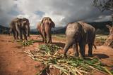 Fototapeta Zwierzęta - słonie