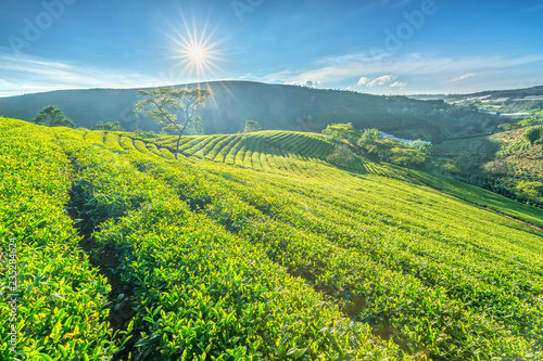 Foto auf Leinwand Lime grun Green tea hill in the highlands in the morning. This tea plantation existed for over a hundred years old and the largest tea supply in the region and exporting