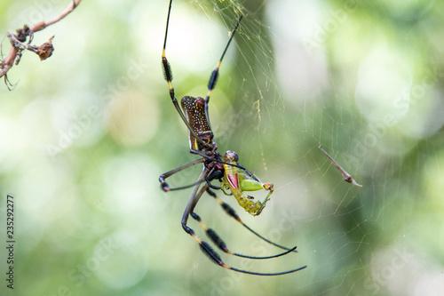 Fotografie, Obraz  Costa Rica