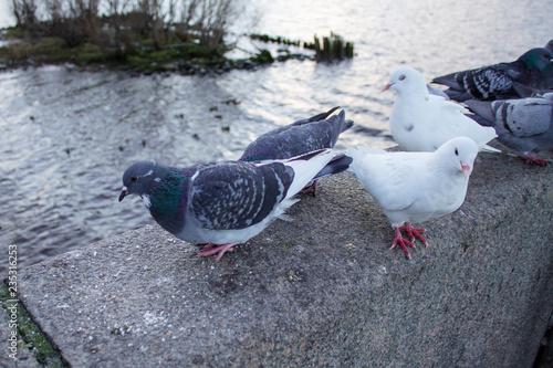серые и белые голуби на парапете
