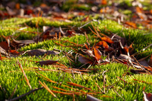 Green Swamp Forest Moss, Cover...